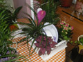Composition of plants in fuchsia color with handmade wooden base